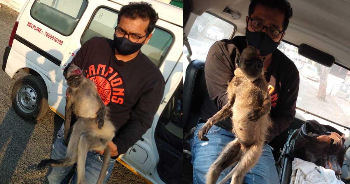 http://www.meranews.com/backend/main_imgs/સદલકાબ_ahmedabad-road-accident-naranpura-monkey-accident-injured_0.jpg?31