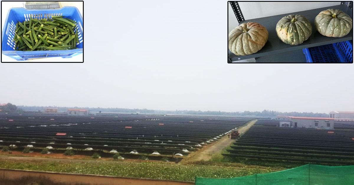 http://www.meranews.com/backend/main_imgs/Airport_kerala-cochin-airport-grows-organic-vegetables-through-sola_0.jpg
