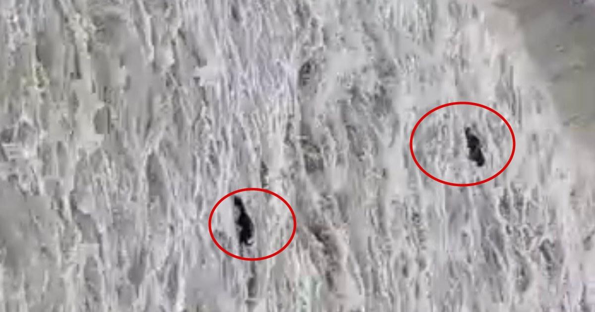 http://www.meranews.com/backend/main_imgs/Buffaloreswcue_sabarkantha-talod-meshwo-river-buffalo-rescue-by-villagers-video-news_0.jpg?99