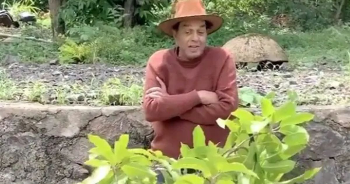 http://www.meranews.com/backend/main_imgs/DharmendraActor_dharmendra-farm-house-mangoes-grown-on-little-tree-video-viral_0.jpg?97