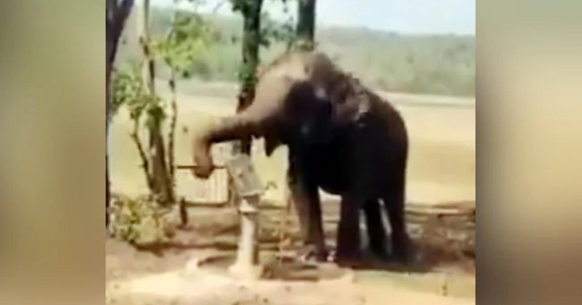 Thirsty Elephant