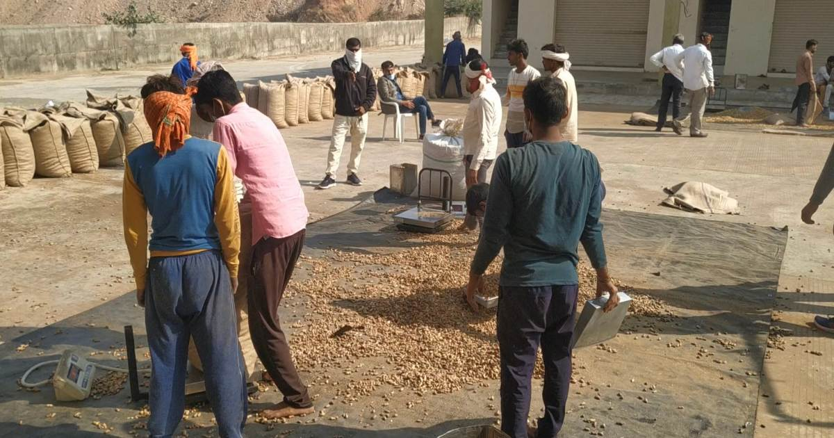 http://www.meranews.com/backend/main_imgs/FarmersWeightforks_modasa-maximum-support-prices-groundnut-weight-forks-farmers_4.jpg?34