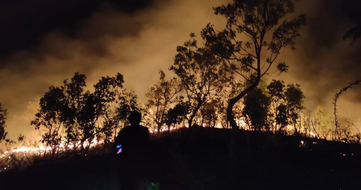 Forestry Fire Hills Shamlaji