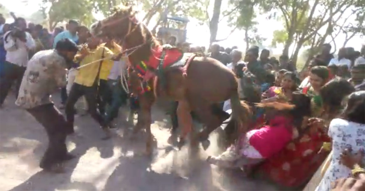 Horse goes on the rampage