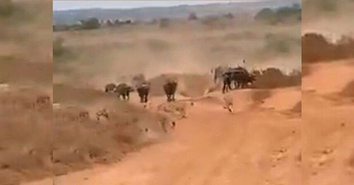 http://www.meranews.com/backend/main_imgs/LionsfightBuffaloinJungle_buffalo-fights-lion-buffalo-herd-chases-pride-of-lions-away-video_0.jpg?62
