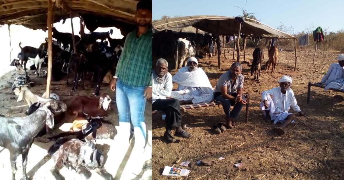 http://www.meranews.com/backend/main_imgs/MaldharigoatsTheif_modasa-goats-thief-keshapur-maldhari-family-gujarat-police-news_1.jpg?26