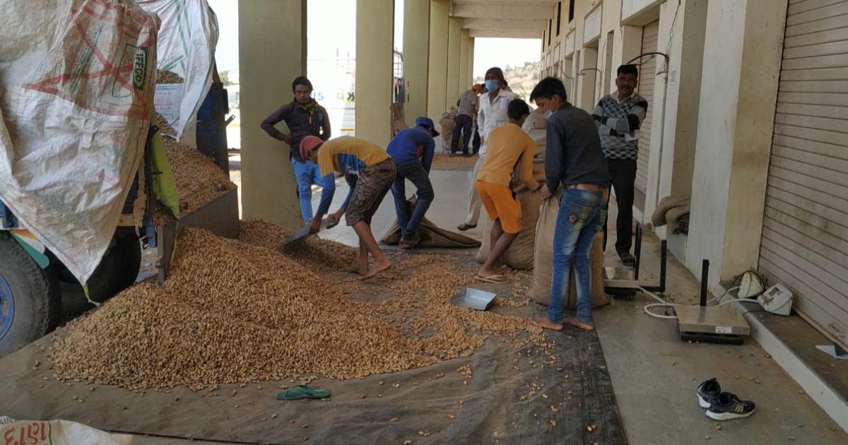 http://www.meranews.com/backend/main_imgs/ModasaMarkeyYards_modasa-farmers-groundnut-weight-forks-msp-aravalli-marketyards_2.jpg?5