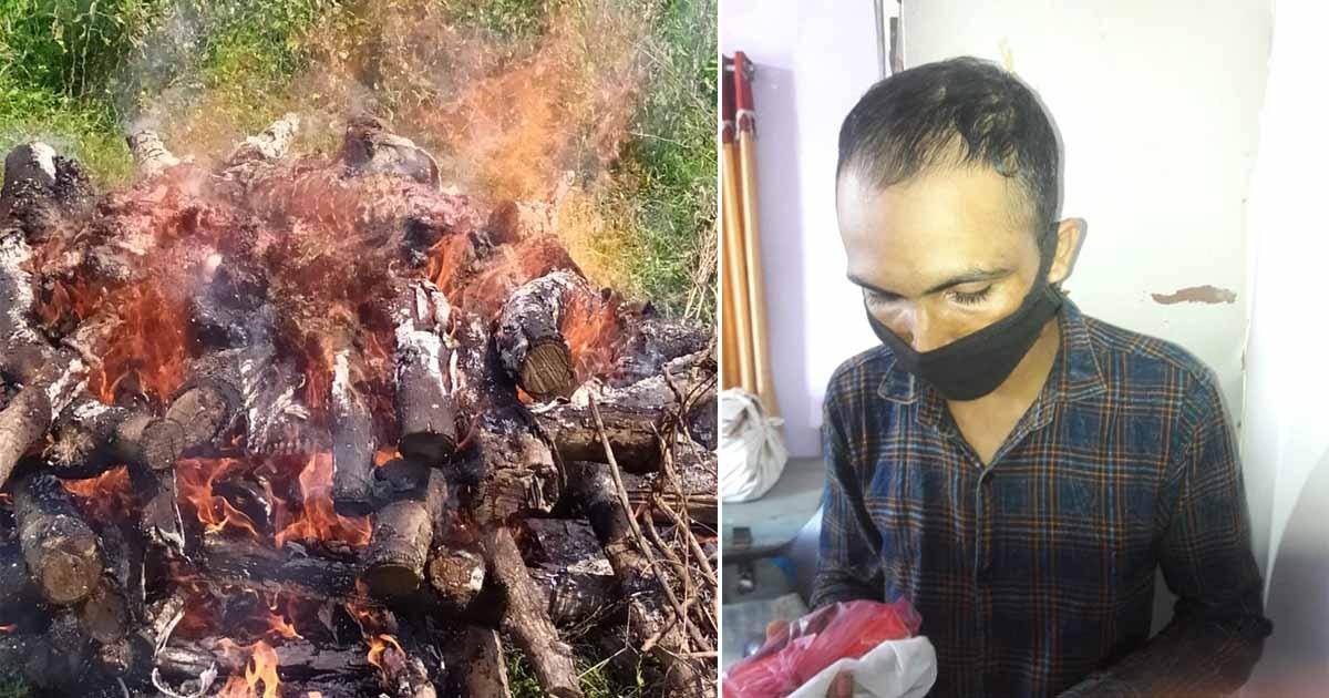 http://www.meranews.com/backend/main_imgs/PangolinBlackMarket_pangolin-black-market-aravalli-police-wildlife-in-gujarat_0.jpg?3