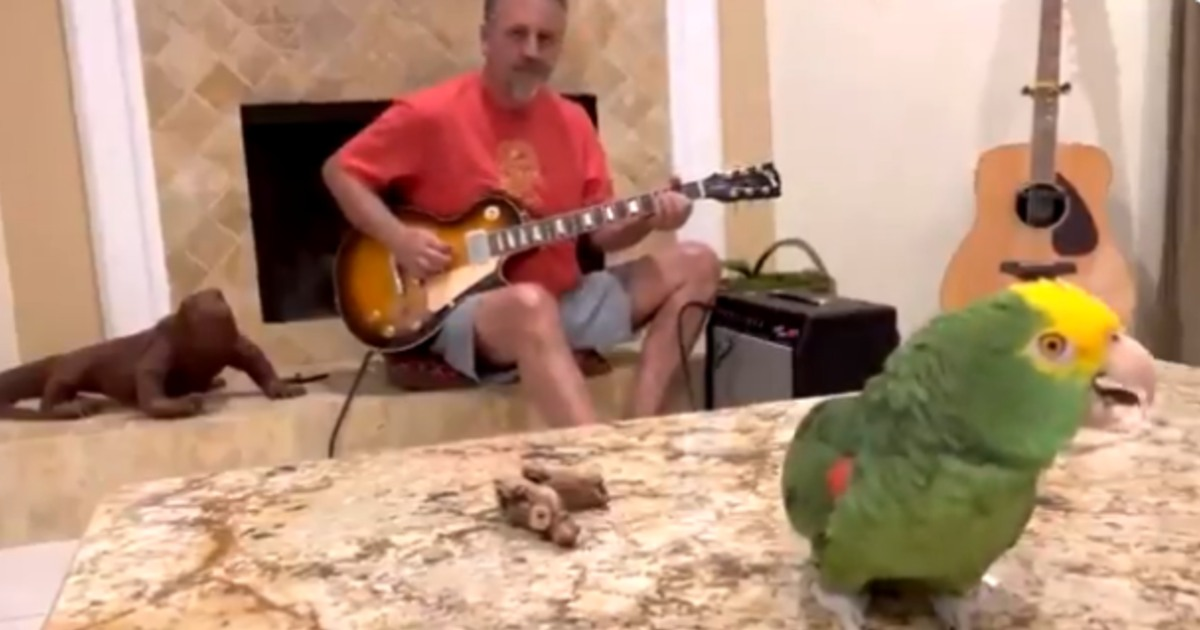 Parrot Sing