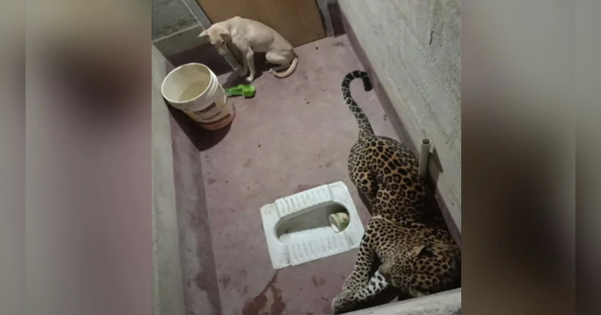http://www.meranews.com/backend/main_imgs/ShockingPhoto_karnataka-dog-got-stuck-in-a-toilet-with-a-panther-for-hours-and-theb_0.jpg?97