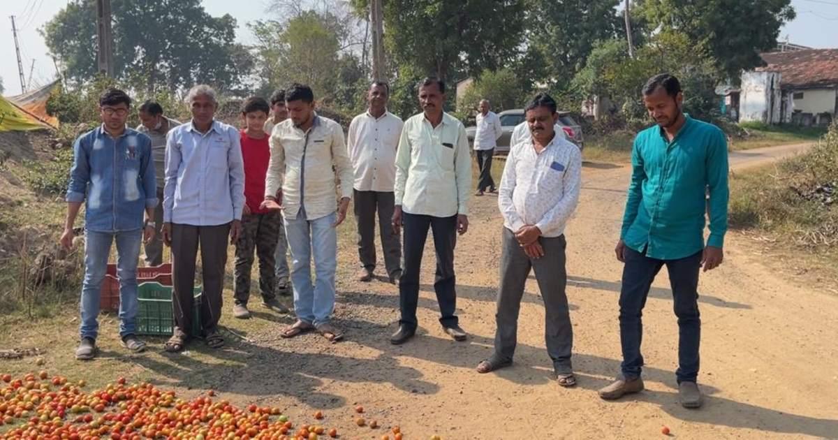 http://www.meranews.com/backend/main_imgs/TomatoNotprice_aravalli-farmers-tomatoes-farm-affordable-price-gujarat-news_1.jpg?46