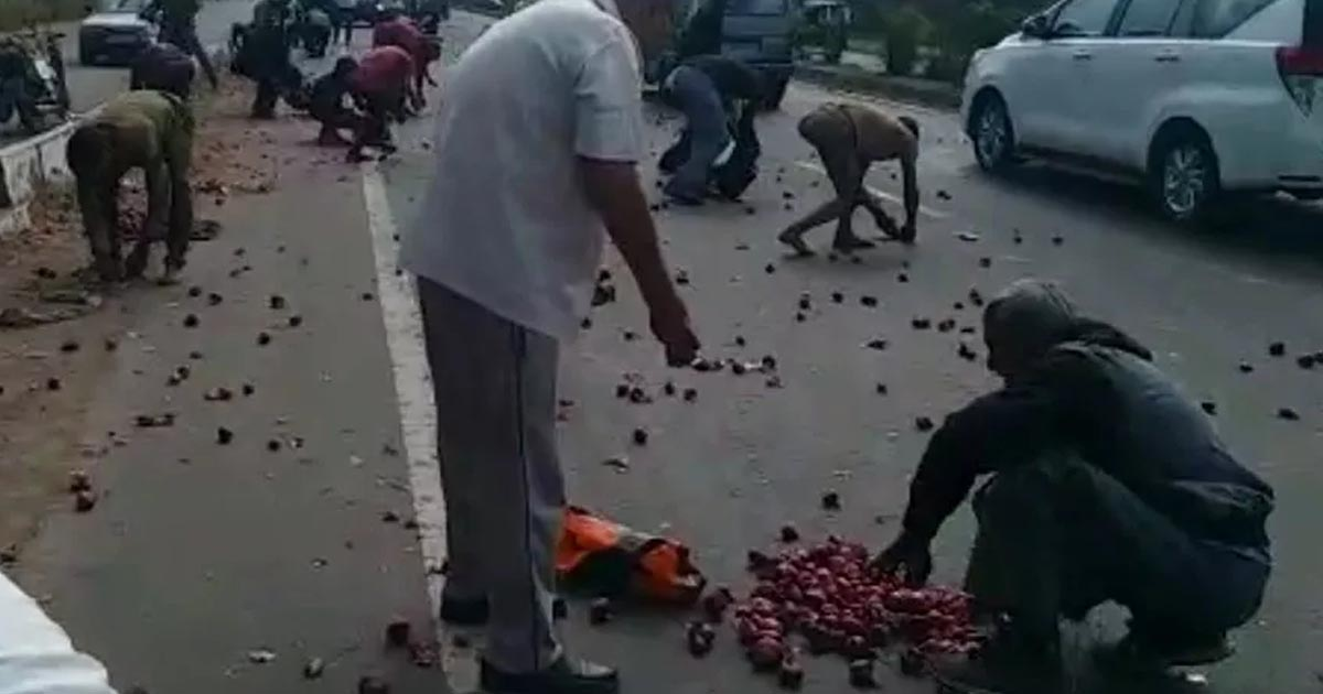http://www.meranews.com/backend/main_imgs/Untitled-1_rajkot-gondal-highway-people-collecting-onion-from-road_0.jpg?93