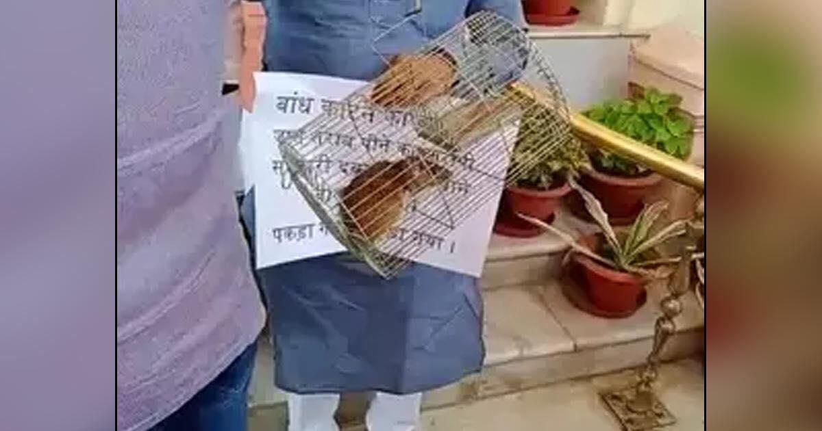 http://www.meranews.com/backend/main_imgs/biharmla_rjd-mla-subodh-kumar-rai-arrived-in-bihar-legislature-with-a-mouse_0.jpg?8?3
