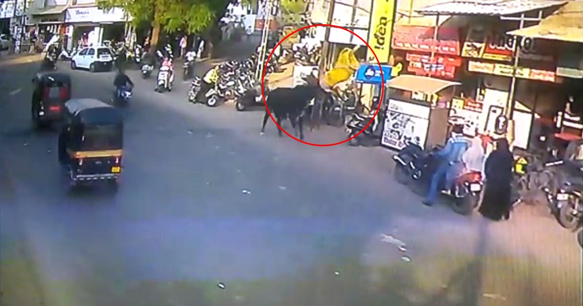 http://www.meranews.com/backend/main_imgs/bull_bharuch-bull-attack-on-woman-while-she-walking-on-road_0.jpg?63