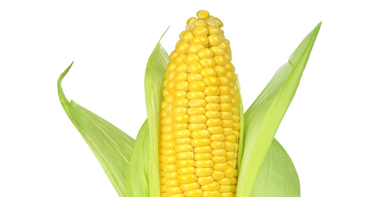 http://www.meranews.com/backend/main_imgs/corn_corn-business-market-news-in-gujarati-ibrahim-patel-business_0.jpg?88