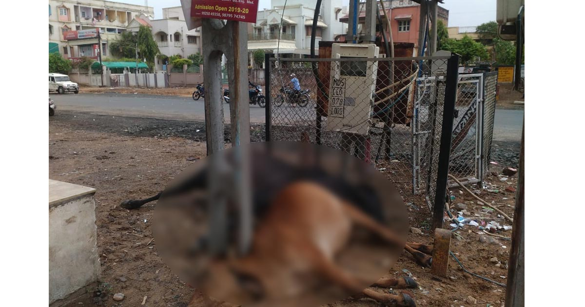 http://www.meranews.com/backend/main_imgs/cow_gujarat-two-cow-electrocuted-in-modasa_0.jpg?25