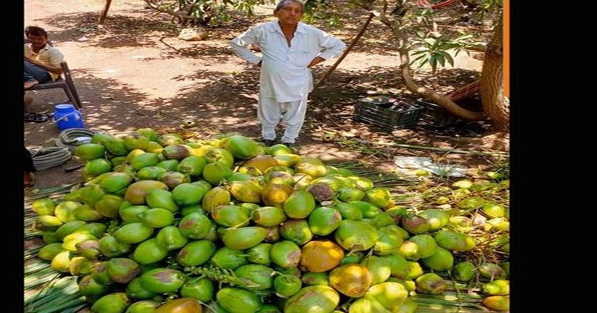 http://www.meranews.com/backend/main_imgs/farmer_junagadh-farmer-donate-coconut-to-the-civil-patient_0.jpg?69