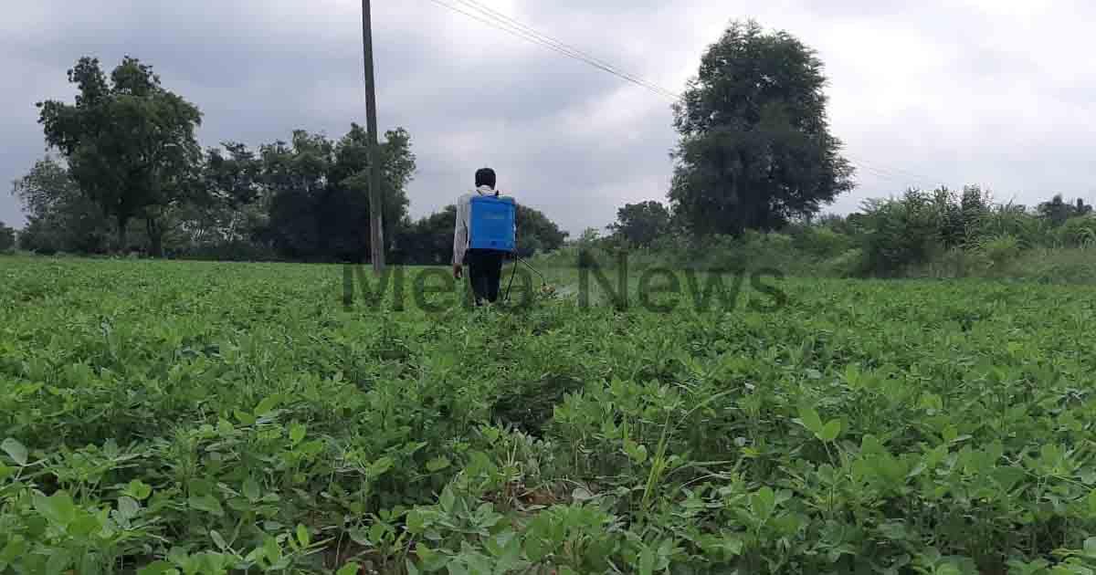 http://www.meranews.com/backend/main_imgs/farmerofindiagujarat_aravalli-farmers-are-still-in-problem-even-purchasing-costl_0.jpg?13