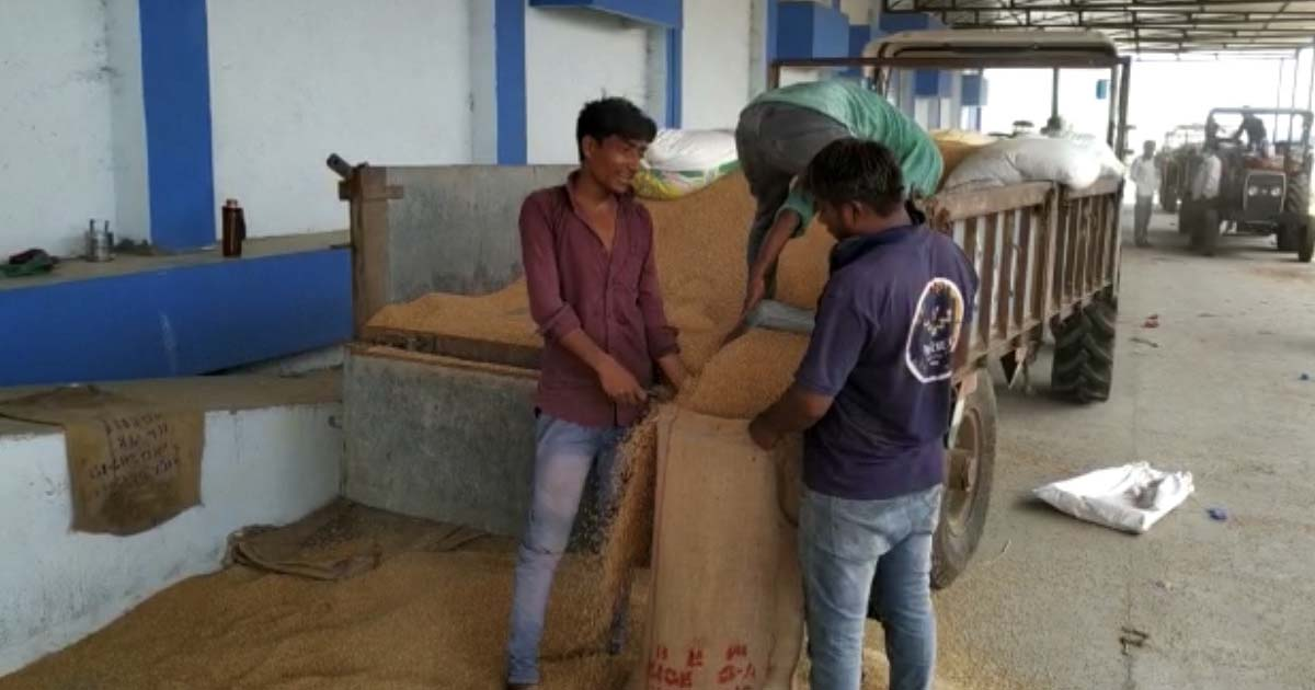 http://www.meranews.com/backend/main_imgs/farmers_nisarg-cyclone-farmers-cyclone-effect-farmers-of-gujarat-wheat_0.jpg?21