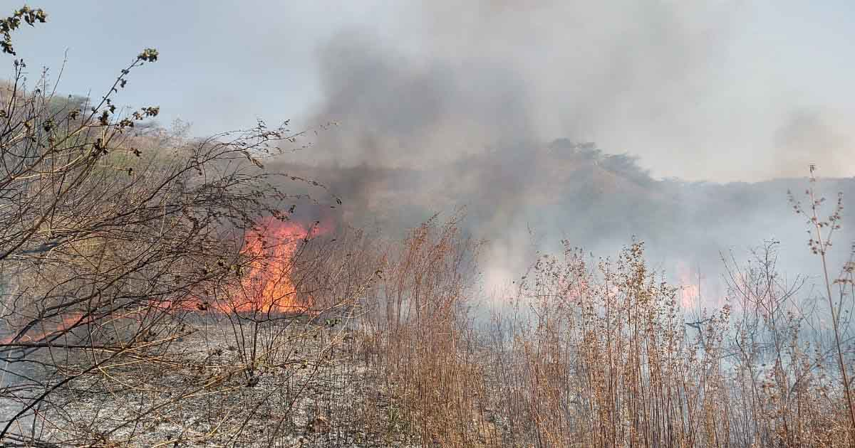 http://www.meranews.com/backend/main_imgs/fireinforest_modasa-fire-in-forest-near-vantda-toll-plaza_0.jpg?44