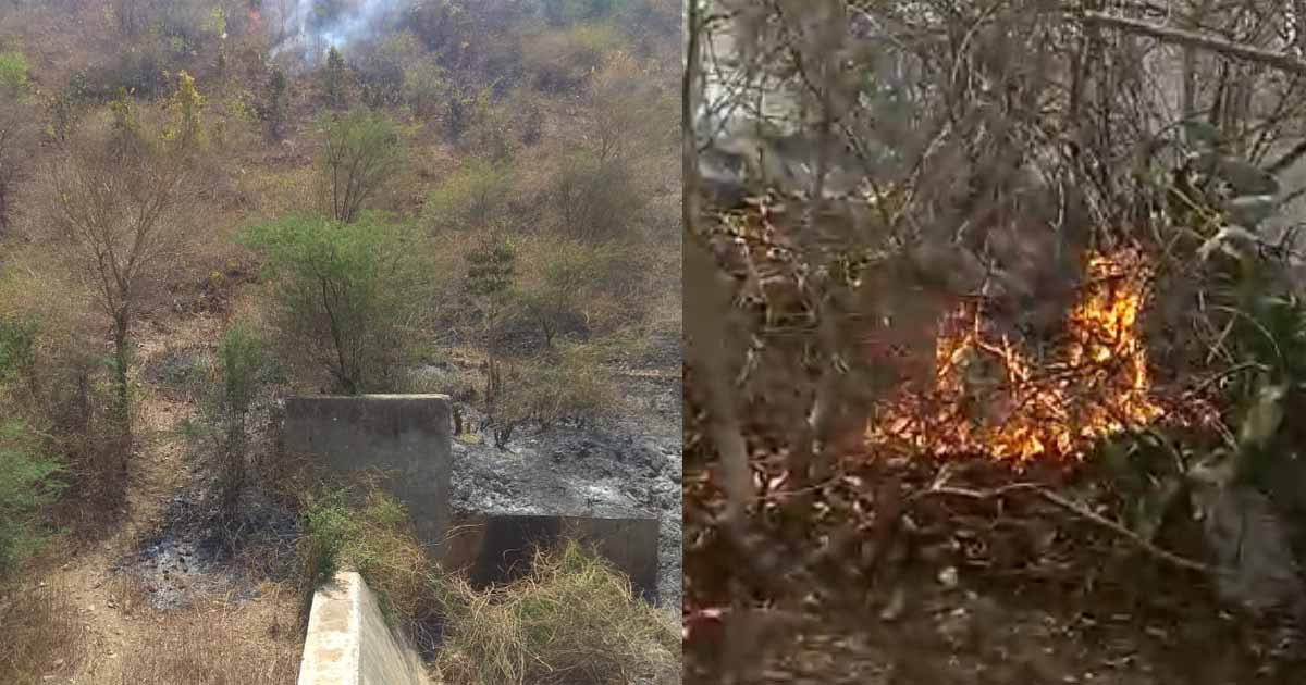 http://www.meranews.com/backend/main_imgs/fireinforestofGujarat_modasa-fire-on-hills-incidents-happens-constantly-why_0.jpg?13