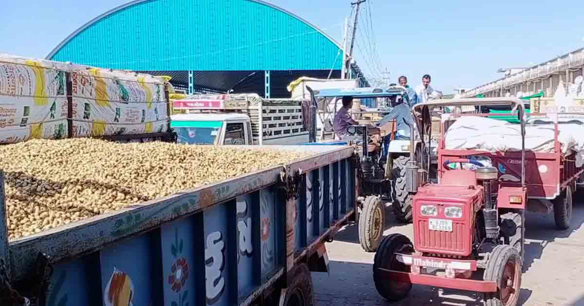 http://www.meranews.com/backend/main_imgs/groundnutsGujarat1_himmatnagar-farmers-are-in-queue-at-market-yard-to-sale-gro_0.jpg?97
