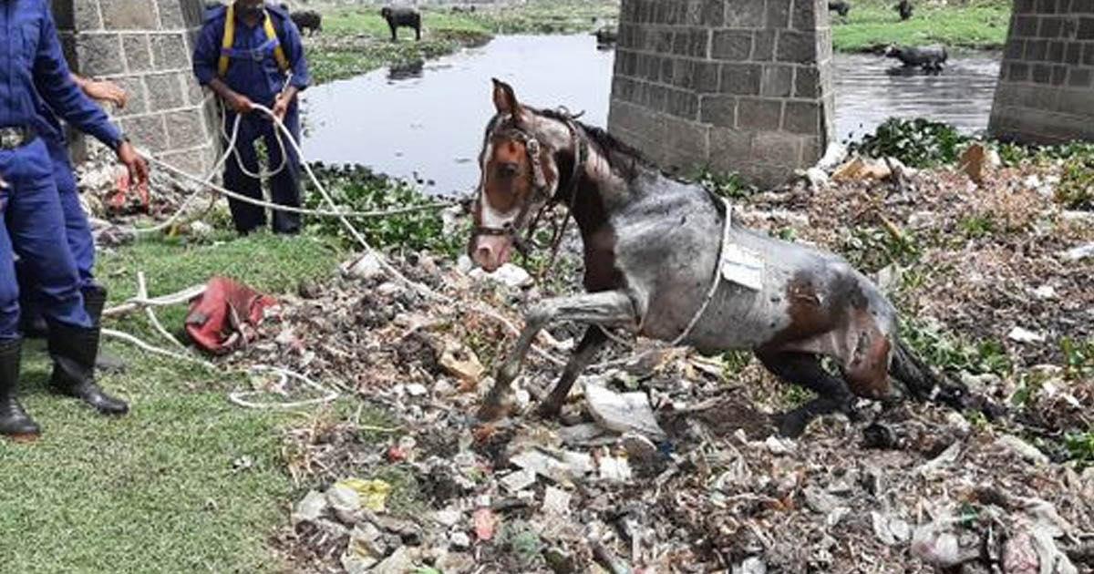http://www.meranews.com/backend/main_imgs/horserescue_rajkot-fire-brigade-horse-save-horse-viral-video-animal-rescue-video_0.jpg?21?37