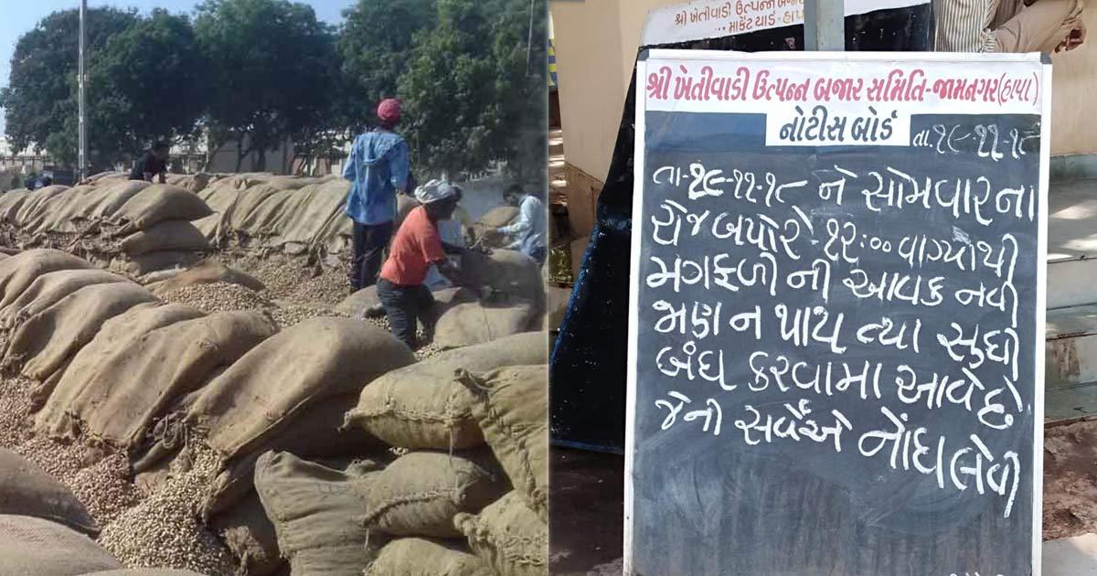 http://www.meranews.com/backend/main_imgs/jamnagar-groundnut_jamnagar-only-one-farmer-arrives-to-sell-groundnuts-at-msp_0.jpg?23
