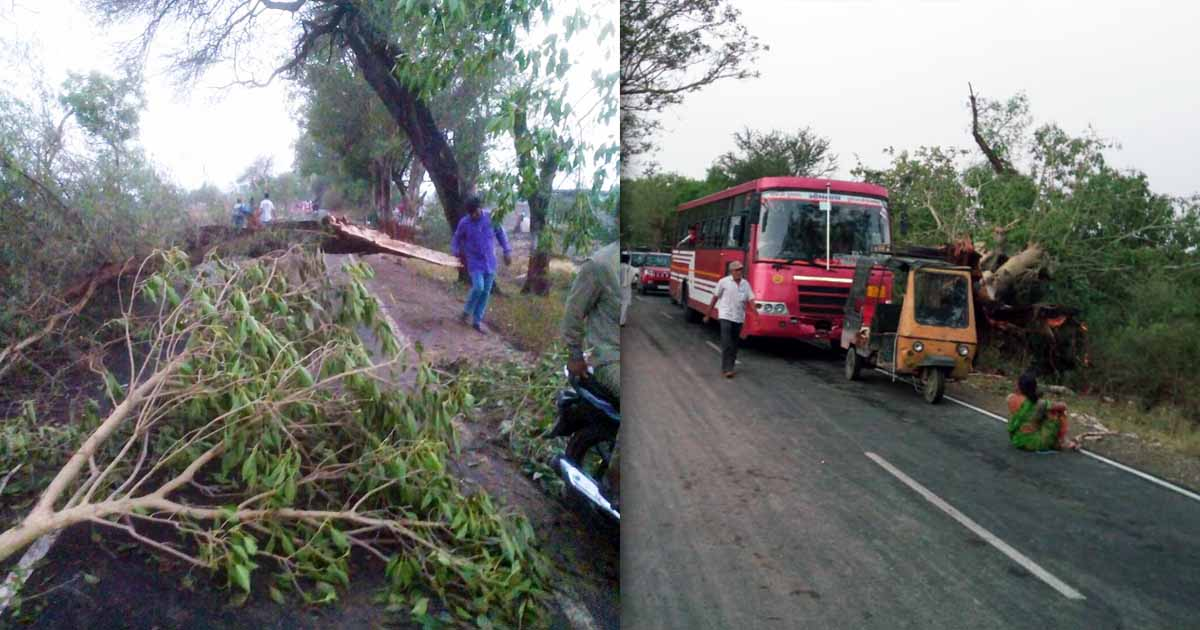 http://www.meranews.com/backend/main_imgs/junagadhphoto_junagadh-76-trees-collapse-due-to-strom_0.jpg?16?62