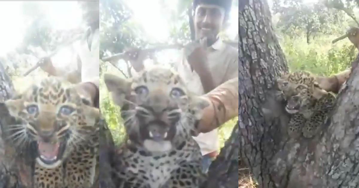 http://www.meranews.com/backend/main_imgs/leopardcub_gir-youths-teased-leopard-cub-video_0.jpg?40