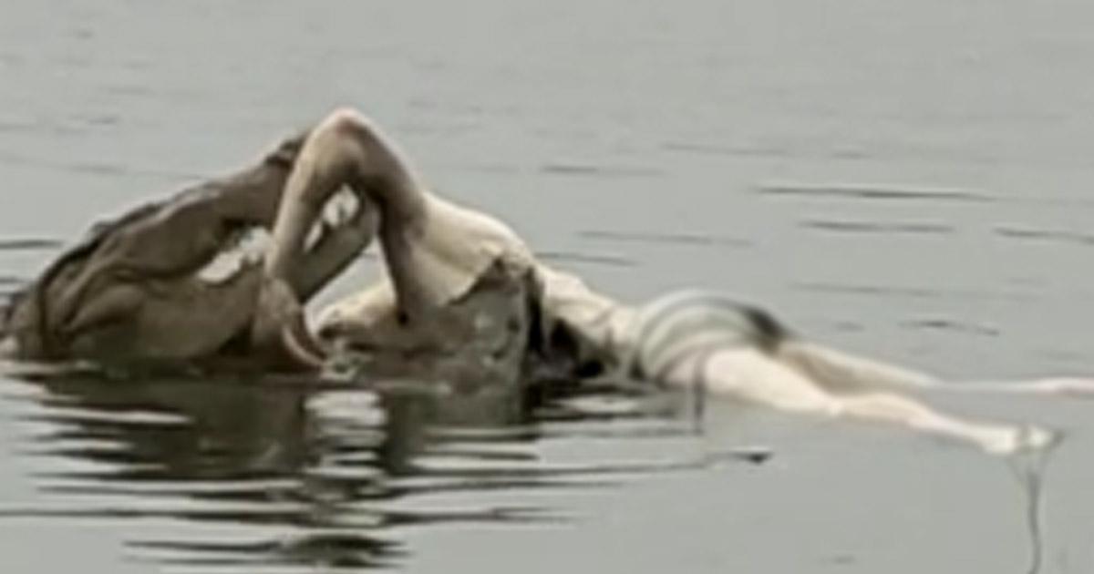 http://www.meranews.com/backend/main_imgs/magar_vadodara-crocodile-attack-viral-video-man-vs-wild-man-an_0.jpg?49?99