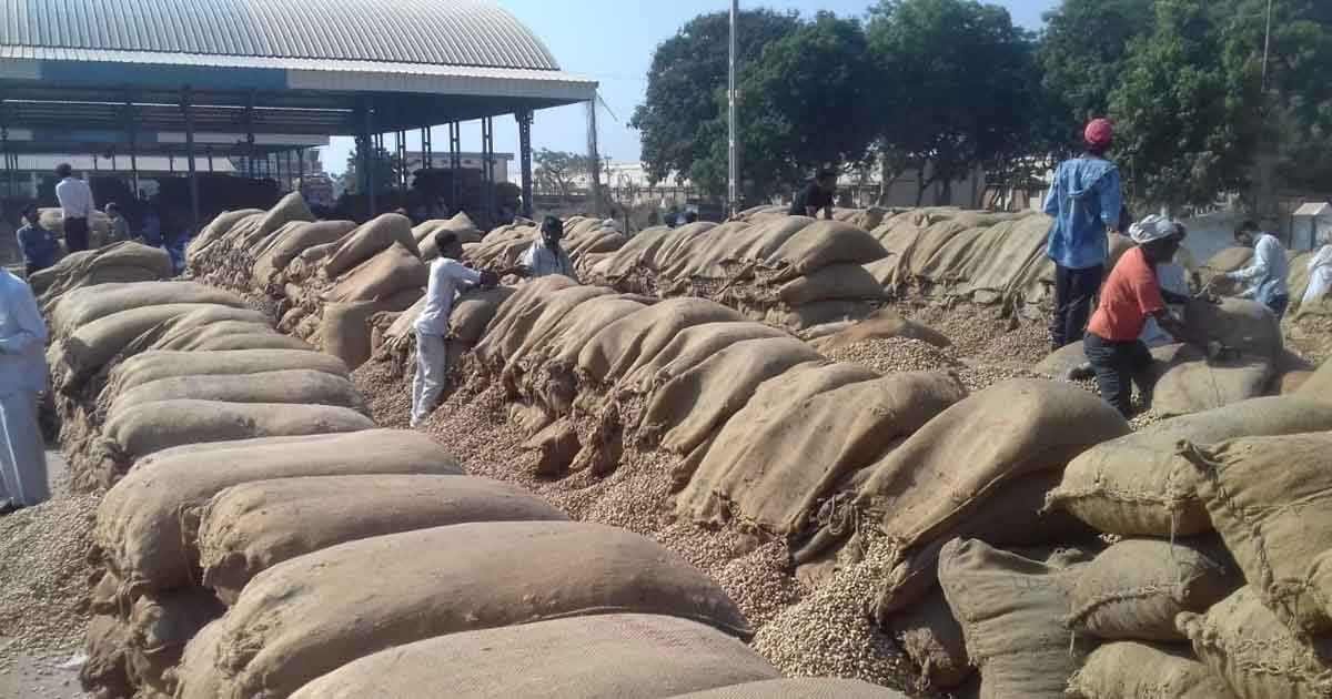 http://www.meranews.com/backend/main_imgs/marketgroundnut_saurashtra-farmers-forced-to-sell-groundnut-for-low-price-d_0.jpg?79