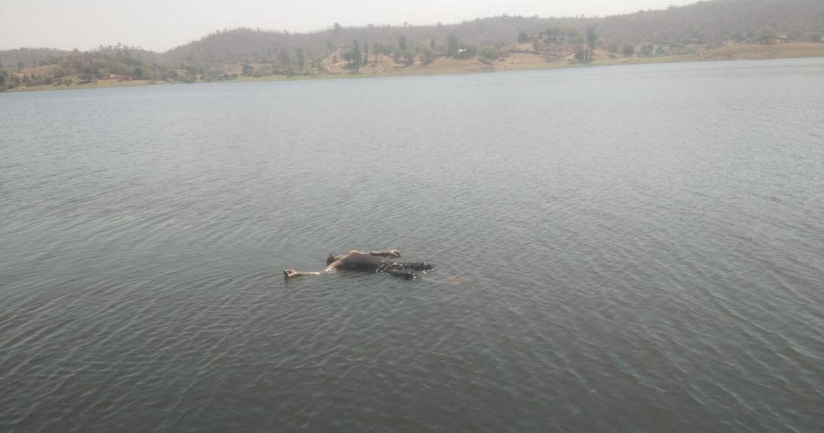 http://www.meranews.com/backend/main_imgs/meshvoriverdeadbody_shyamlaji-youths-dead-body-found-after-48-hours_0.jpg?83