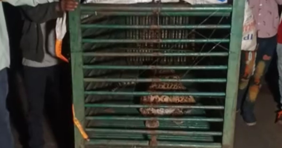 http://www.meranews.com/backend/main_imgs/moraforest_modasa-aravalli-panther-in-cage-forest-department-latest-gujarati-news_1.jpg?43