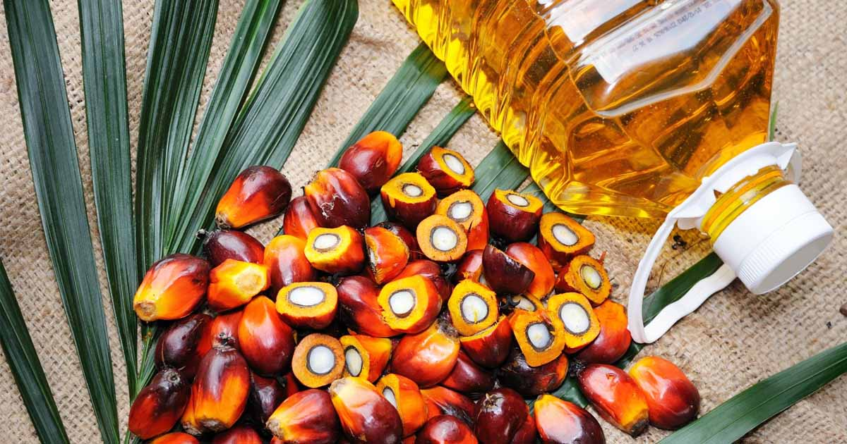 http://www.meranews.com/backend/main_imgs/palm_palm-olive-oil-market-rate-market-of-palm-oil-ibrahim-patel_0.jpg?11
