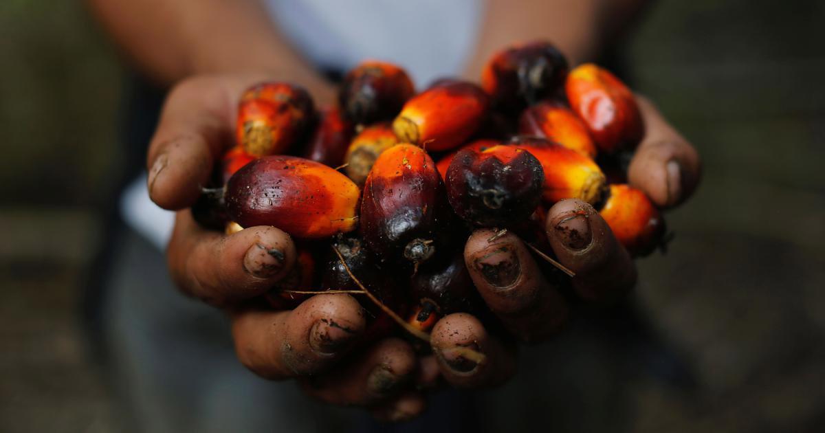 http://www.meranews.com/backend/main_imgs/palm_profits-will-take-palm-oil-to-new-heights_0.jpg?67