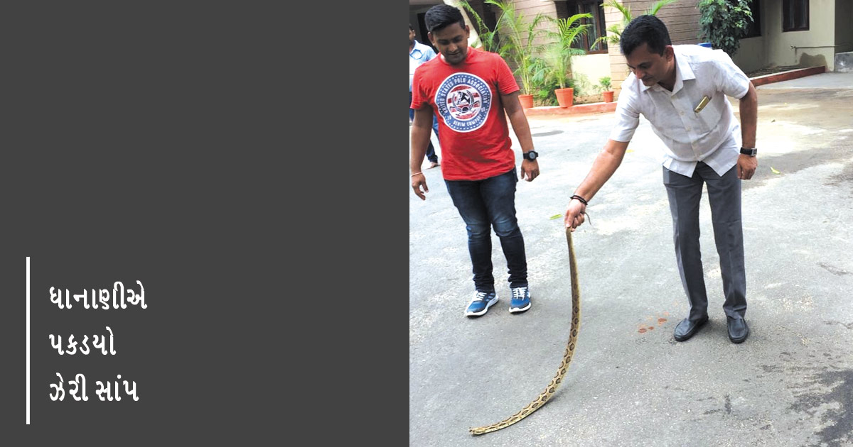 http://www.meranews.com/backend/main_imgs/paresh-dhanani_russells-viper-found-at-lop-paresh-dhananis-residence_0.jpg?70