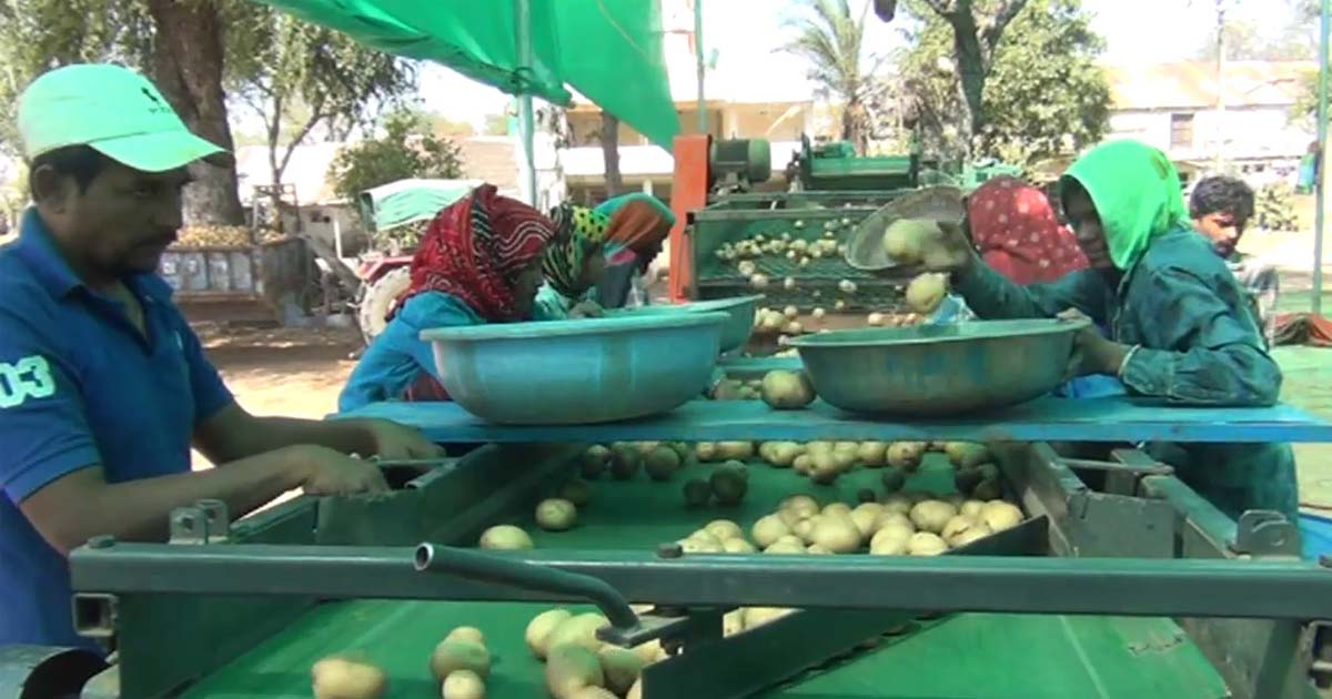 http://www.meranews.com/backend/main_imgs/potatosgujarat4_aravalli-potatoes-worth-rs-55-crore-in-cold-storage-due-to_2.jpg?58
