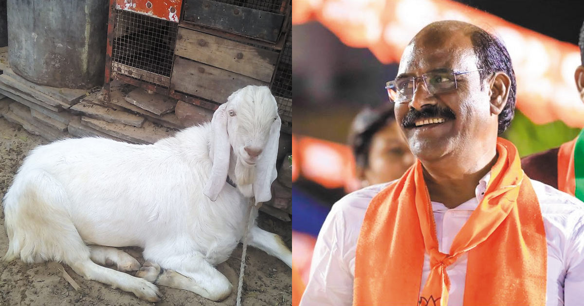 http://www.meranews.com/backend/main_imgs/pradip-parmar_mla-pradip-parmar-recovers-goat-stolen-from-at-surat-return_0.jpg?88