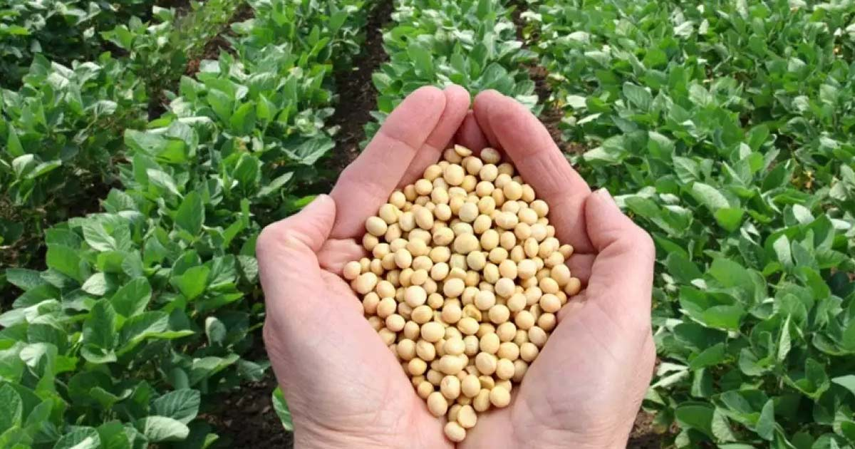 http://www.meranews.com/backend/main_imgs/soybean_soybean-prices-is-increase-25-china-demand_0.jpg?3?9